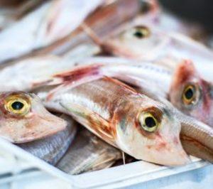 Anfaco reúne a expertos europeos para abordar el consumo de pescado