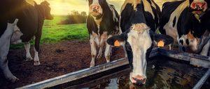 Informe 2018 sobre el sector lácteo