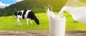 Informe 2018 sobre el sector de leche de consumo