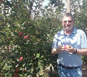 Concluye la cosecha de las manzanas de pulpa roja Kissabel