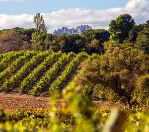 Bodegas Lecea y Arizcuren Wines se incorporan a Bodegas Familiares de Rioja