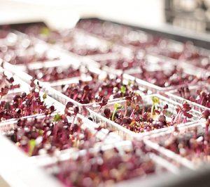 Las grandes hortofrutícolas apuestan fuerte por la innovación