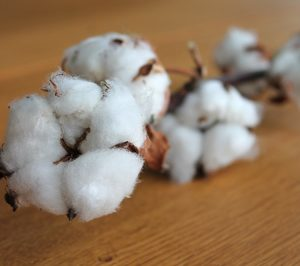 Cotton South incrementa sus inversiones