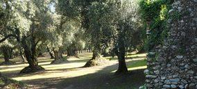 Se ultima el pacto para una gran fusión cooperativa aceitera en Andalucía