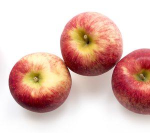 IRTA y Fruit Futur preparan el lanzamiento de sus nuevas variedades