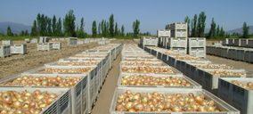Queda extinguida una exportadora valenciana de cebolla, ajo y cítricos