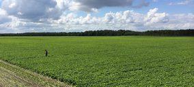 La producción de verdura congelada continúa su tendencia al alza