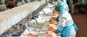 Informe 2019 del sector de carne de porcino