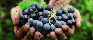 Informe 2019 sobre el segmento de Vinos Ecológicos