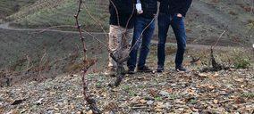 Familia Torres lanza su vino más exclusivo de la DOQ Priorat