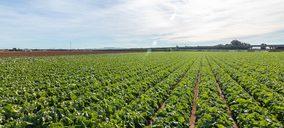 Vegetales Línea Verde abre una fábrica en Murcia y prepara novedades veganas