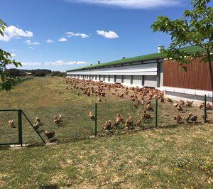 Huevos Guillén batirá récord de inversión y construirá una nueva granja