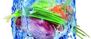 Informe 2019 de Vegetales Congelados