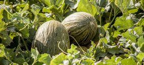 Proexport anticipa una campaña de melón y sandía similar a la anterior