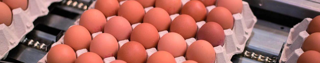 Informe 2019 del sector de huevos en España