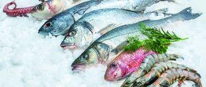 Informe 2019 del sector de pescado y marisco congelado