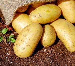 Carsa proyecta la construcción de una nave de conservación de patata
