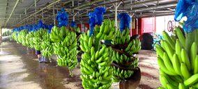 La UE no aplica el mecanismo de estabilización a las importaciones de banana
