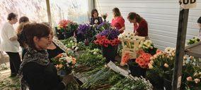 Anecoop se diversifica en Francia con la especialista en floricultura FlorenSud