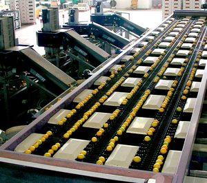 Hijos de Alberto del Cerro ya opera en su nueva planta para limón ecológico