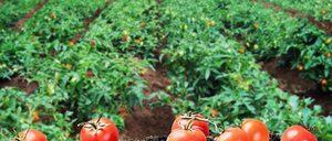 Informe 2019 sobre la Industria Alimentaria