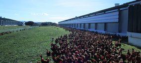 Los principales productores de huevos invertirán más de 200 M€ en bienestar