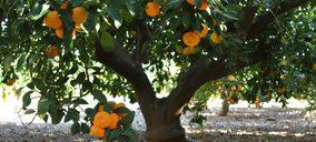 Miura avanza en el sector Agro y traslada su participación en Citri&Co al nuevo fondo Frutas