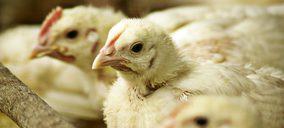 Vall Companys simplifica su división avícola, que creció con fuerza en 2018
