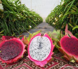 Un operador canario de pitaya consolida su presencia en el mercado español