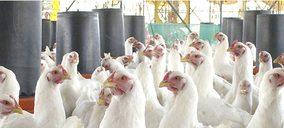 La cooperativa Guadavi, nueva víctima del sector avícola