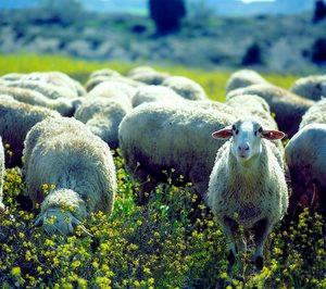 ¿Conseguirá el sector de carne de ovino salir de la crisis?