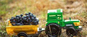 Informe 2020 del sector de Transporte Hortofrutícola en España