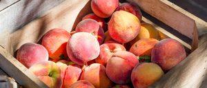 Artículo sobre el sector de Fruta de Hueso