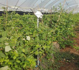 CoopHuelva inicia su proyecto integral de agricultura 4.0