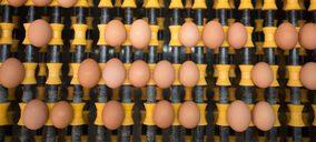 Avícola Mondejana libera a la mitad de sus gallinas y avanza en su reconversión
