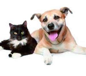 Cadenas de tiendas para mascotas: crecimiento, diversificación de servicios y ¿concentración?