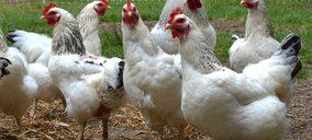 El grupo holandés Plukon desafía la crisis avícola con la compra de VMR