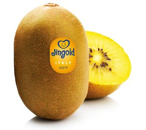 El kiwi amarillo de Jingold busca aumentar su cuota en España