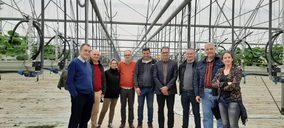 El cultivo de fresa se estabiliza en Europa