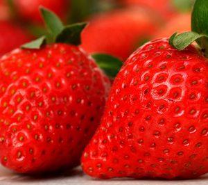 El sector nacional de la frutos rojos diversifica la inversión en su última campaña