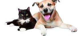 Mejor etiquetado y prescripción veterinaria en la nueva normativa sobre alimentos dietéticos para mascotas