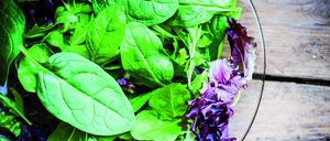 Informe 2020 sobre IV Gama y otros Refrigerados Hortofrutícolas