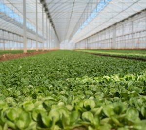 Florette invertirá 13 M en la construcción de su séptimo centro productivo