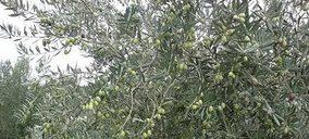 Las cotizaciones del aceite de oliva siguen hundidas pese al aumento de las exportaciones