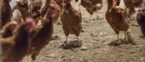Informe 2020 del sector de huevos en España
