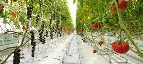 Syngenta pone en marcha su nuevo centro de I+D específico para tomate