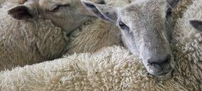 Primera víctima del Covid-19 en el sector ovino