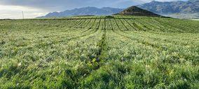 Bio Campojoyma incrementa su producción de limón ecológico un 50%