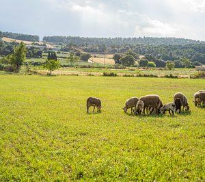 La carne de cordero y cabrito llega a Amazon