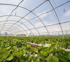 Mapla busca desarrollar un sistema voluntario de gestión de residuos plásticos agrícolas